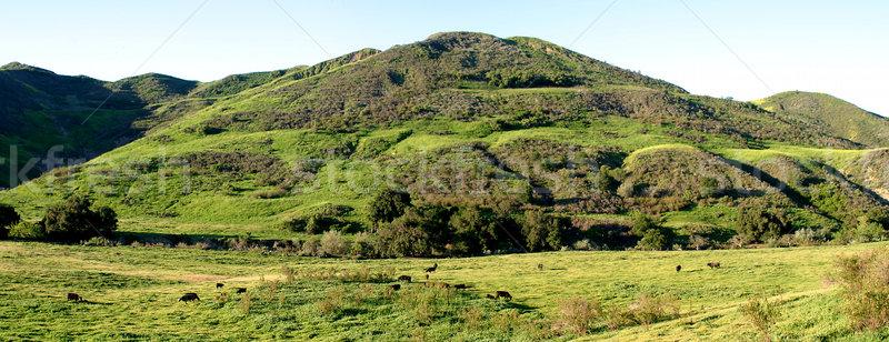 Verde valle vacche natura mucca farm Foto d'archivio © hlehnerer