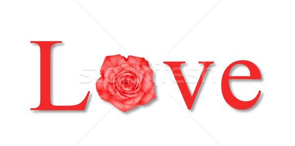Love Flower Red Stock photo © hlehnerer