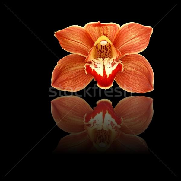 Rojo reflexión naranja orquídeas negro belleza Foto stock © hlehnerer