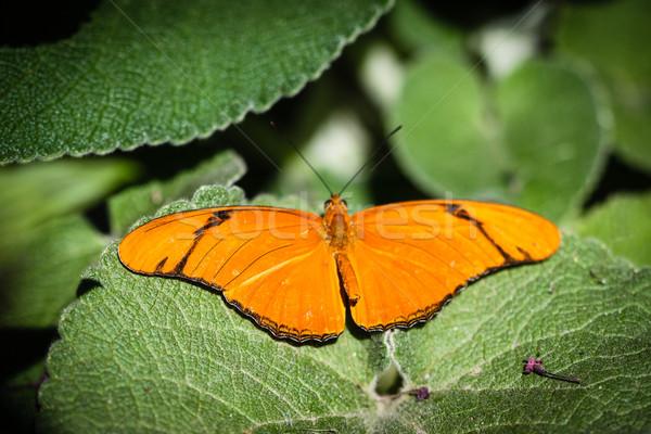 Színes zöld piros gyönyörű rovar rovar Stock fotó © hlehnerer