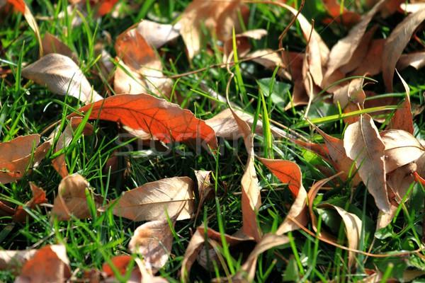 Foliage and Grass Stock photo © hlehnerer
