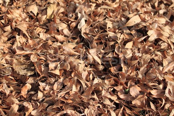 Najaar bruin textuur boom natuur achtergrond Stockfoto © hlehnerer