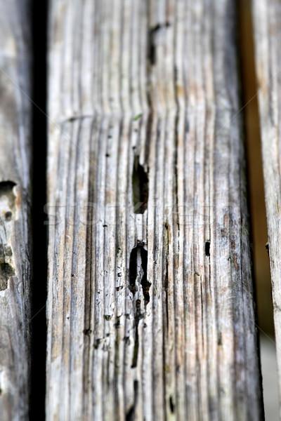 Eski ahşap doku çok ahşap arka plan bitki Stok fotoğraf © hlehnerer