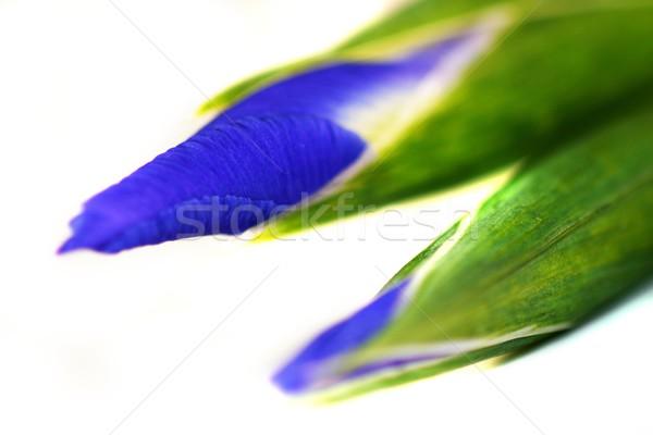 アイリス 青 緑 孤立した 白 花 ストックフォト © hlehnerer