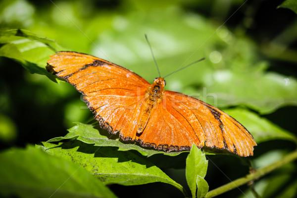 Colorato verde rosso bella insetto bug Foto d'archivio © hlehnerer