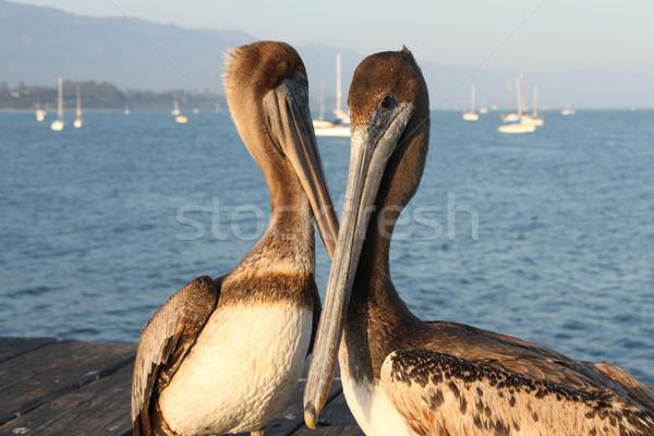 Kalifornien zwei Wasser Sonnenuntergang Vögel Stock foto © hlehnerer