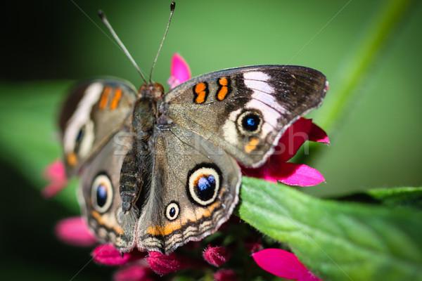 Színes pillangó természet nyár zöld kék Stock fotó © hlehnerer