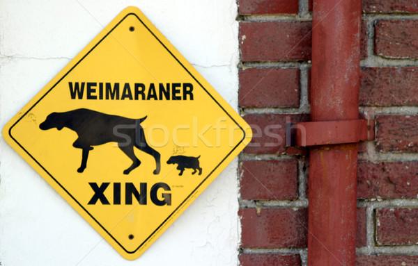 Amarillo calle fondo signo negro Foto stock © hlehnerer