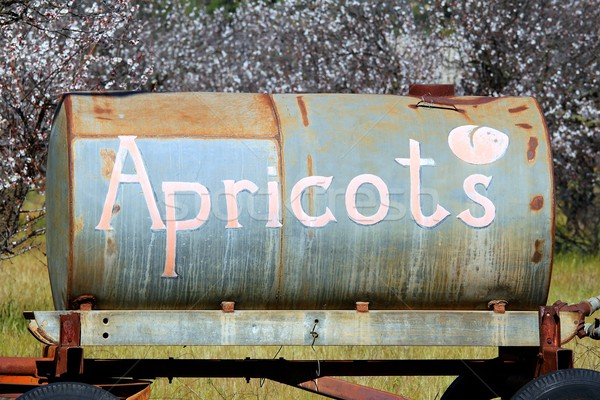 Apricots Stock photo © hlehnerer