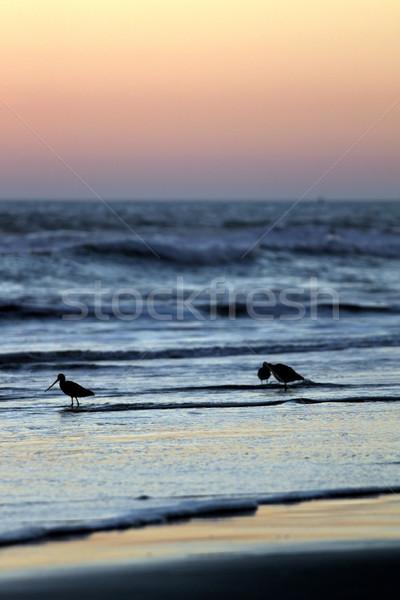 Sunset Birds Stock photo © hlehnerer