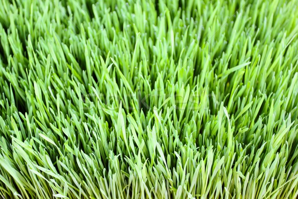 Fű közelkép zöld fű levelek lomb tavasz Stock fotó © hlehnerer