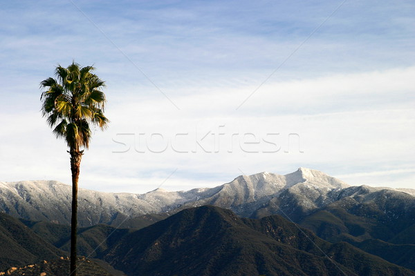 Southern California Snow Stock photo © hlehnerer