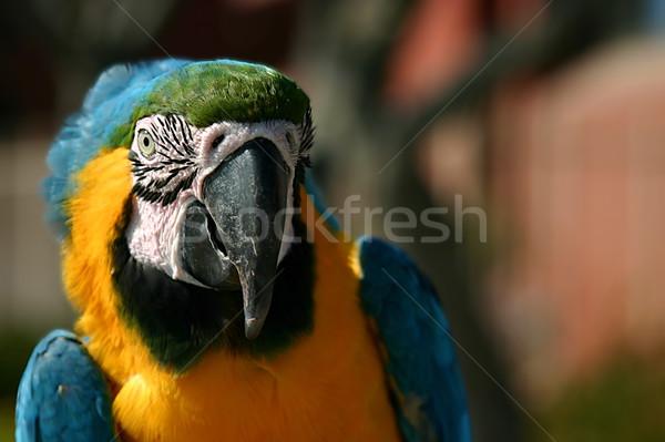 Macaw Stock photo © hlehnerer