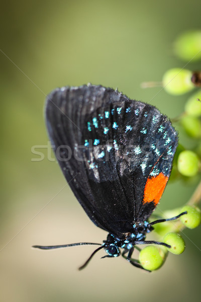 Colorido borboleta sessão folhas verdes folha jardim Foto stock © hlehnerer