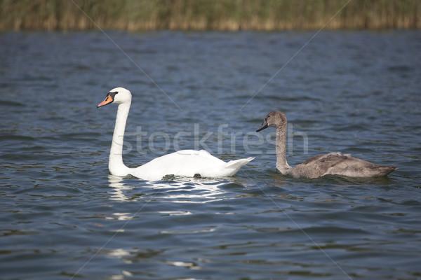 Iki göl anne bebek çift güzellik Stok fotoğraf © Hochwander