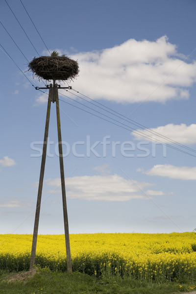 stork's nest Stock photo © Hochwander