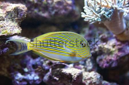 тропические рыбы фотография воды природы морем подводного Сток-фото © Hochwander