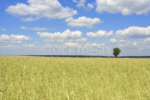 Gabona hangya kék ég Lengyelország fa erdő Stock fotó © Hochwander