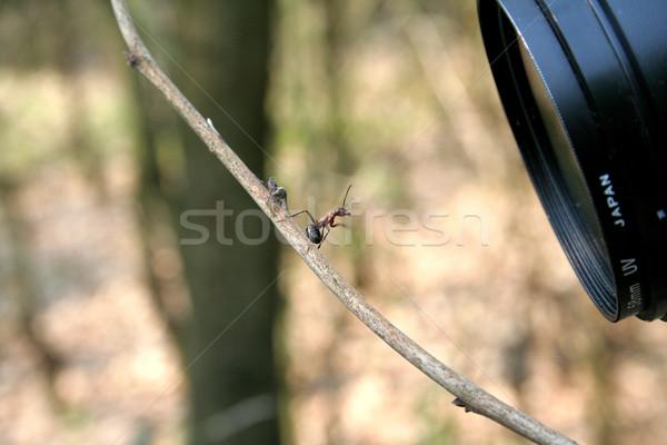 Ant obiettivo foresta modello foto sorridere Foto d'archivio © Hochwander