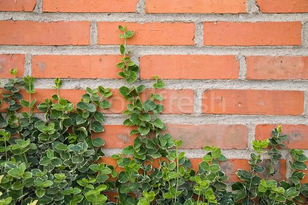 Borostyán levelek tégla téglák háttér Stock fotó © Hochwander