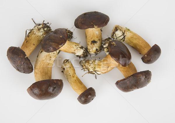 Weinig eetbaar champignons witte bos vers Stockfoto © Hochwander