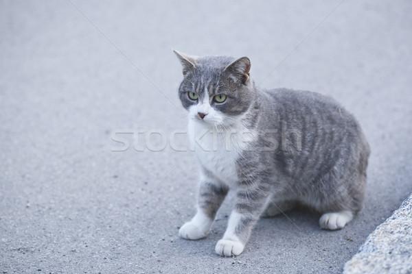 Gato sesión carretera ojo animales asfalto Foto stock © Hochwander