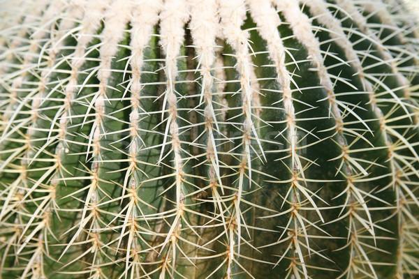 Cactus grand jardin botanique soleil nature montagne Photo stock © Hochwander