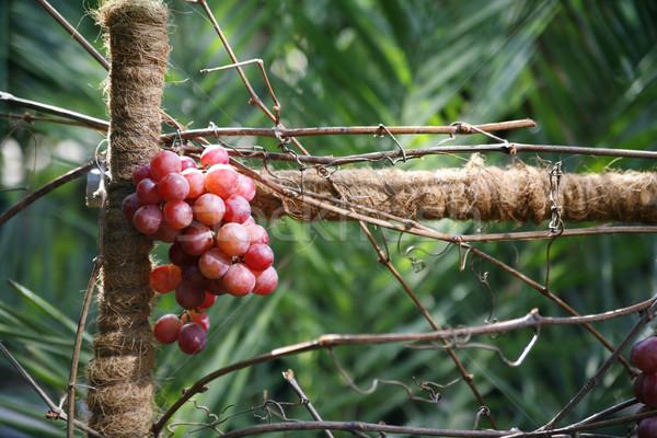 поздний завтрак виноград ботанический сад вино зеленый пить Сток-фото © Hochwander
