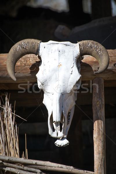 Oude trofee koeien schedel hoofd dode Stockfoto © Hochwander