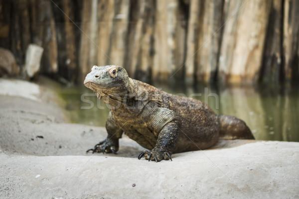 Monitor hagedis water meer hoofd dier Stockfoto © Hochwander