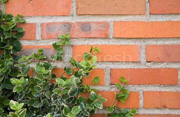 Klimop bladeren bakstenen achtergrond Stockfoto © Hochwander