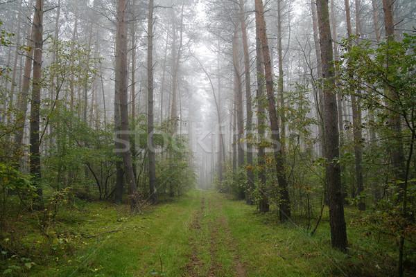 Ködös erdő Lengyelország reggel út természet Stock fotó © Hochwander