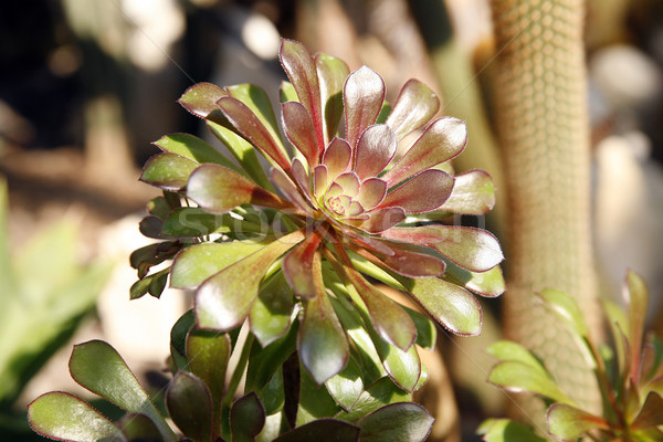 Verde planta jardín botánico hoja hojas vida Foto stock © Hochwander