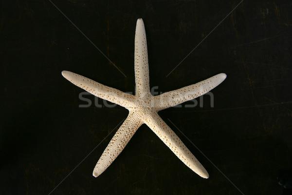 Witte zeester bruin borst houten zee Stockfoto © Hochwander