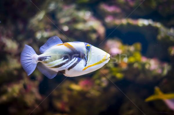 熱帯 水族館 美 海 水中 動物 ストックフォト © Hochwander