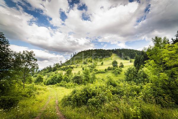 Herbe paysage beauté été montagnes nuage Photo stock © Hochwander
