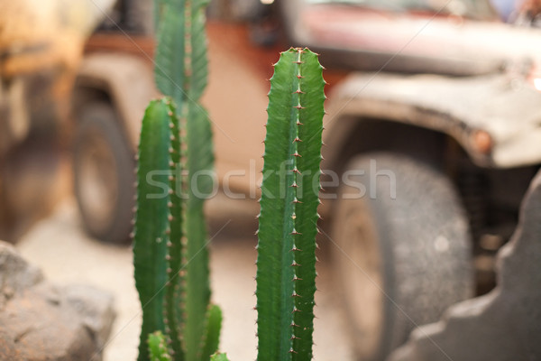 desert cactus over the offroad car - shallow DOF Stock photo © Hochwander