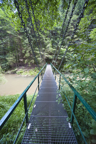 Opknoping brug paradijs boom hout bos Stockfoto © Hochwander
