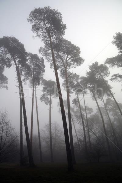 Orman iç karartıcı doğa yaprak üzücü Stok fotoğraf © Hochwander