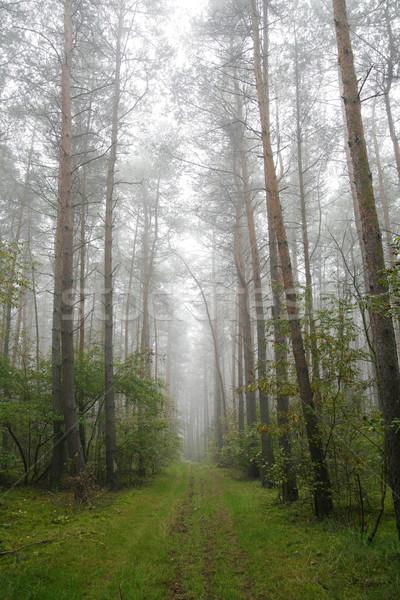 туманный лес Польша утра дороги природы Сток-фото © Hochwander