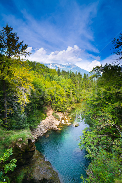 Alpes Slovénie large photo forêt nature Photo stock © Hochwander