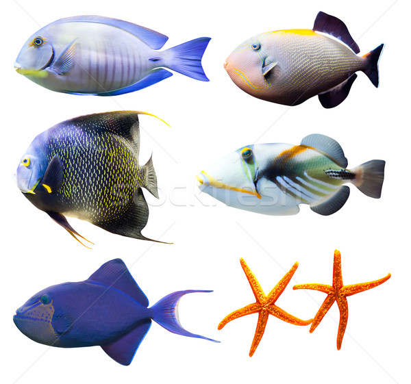 tropical world of fish part 2 isolated on white Stock photo © Hochwander