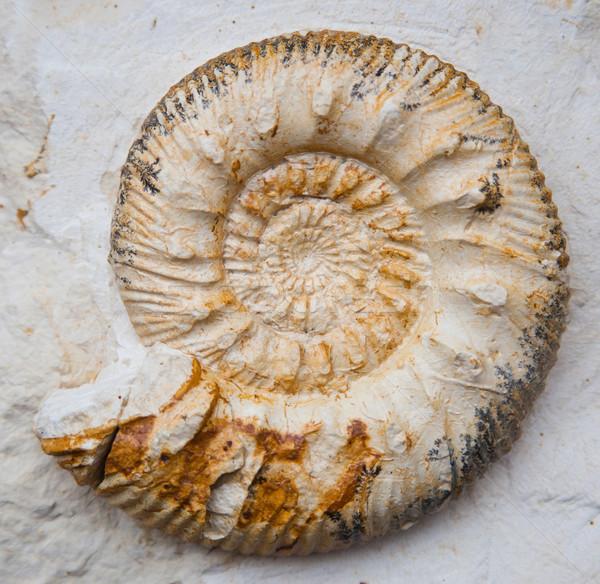 Pasado piedra Shell piedras espiral naturales Foto stock © Hochwander