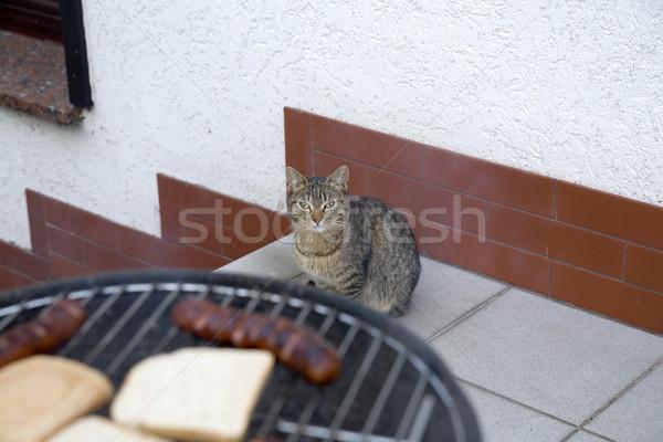 Faminto gato olhando saboroso salsichas grelha Foto stock © Hochwander