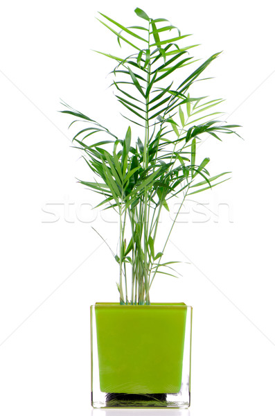Houseplant Stock photo © homydesign