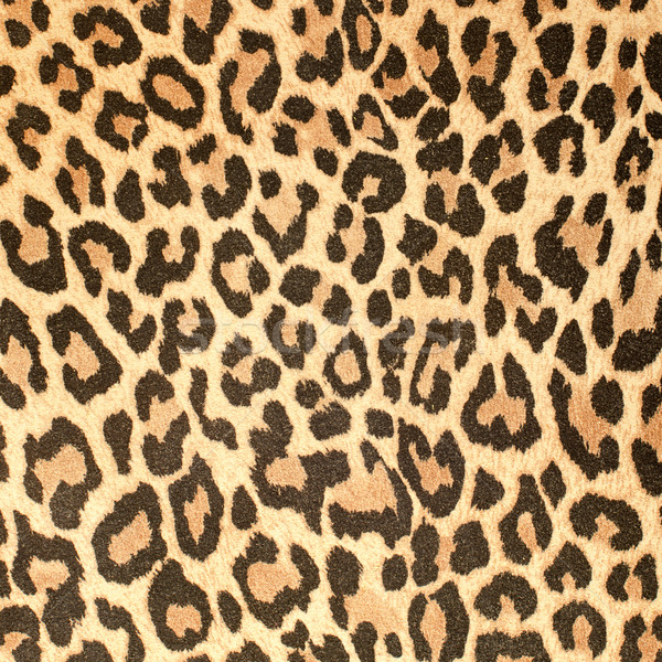Leopard leather pattern texture closeup Stock photo © homydesign
