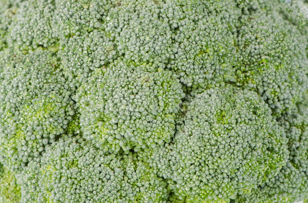 Brocolli background Stock photo © homydesign