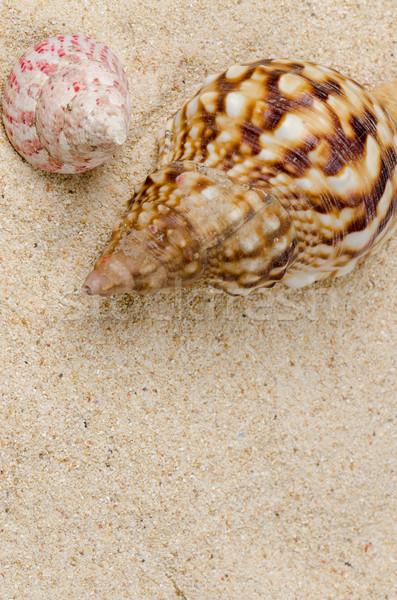 Sea shell on the shore  Stock photo © homydesign