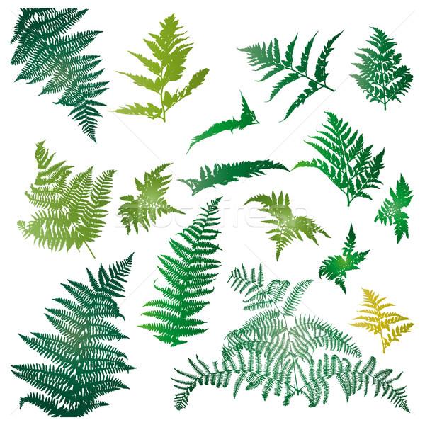 Eğreltiotu yaprakları resimli ayarlamak dizayn elemanları Stok fotoğraf © homydesign