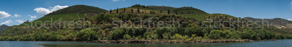 Vineyars in Douro Valley Stock photo © homydesign